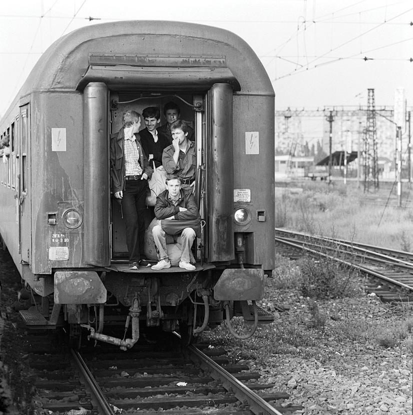 111A - oliwka - czoło.jpg