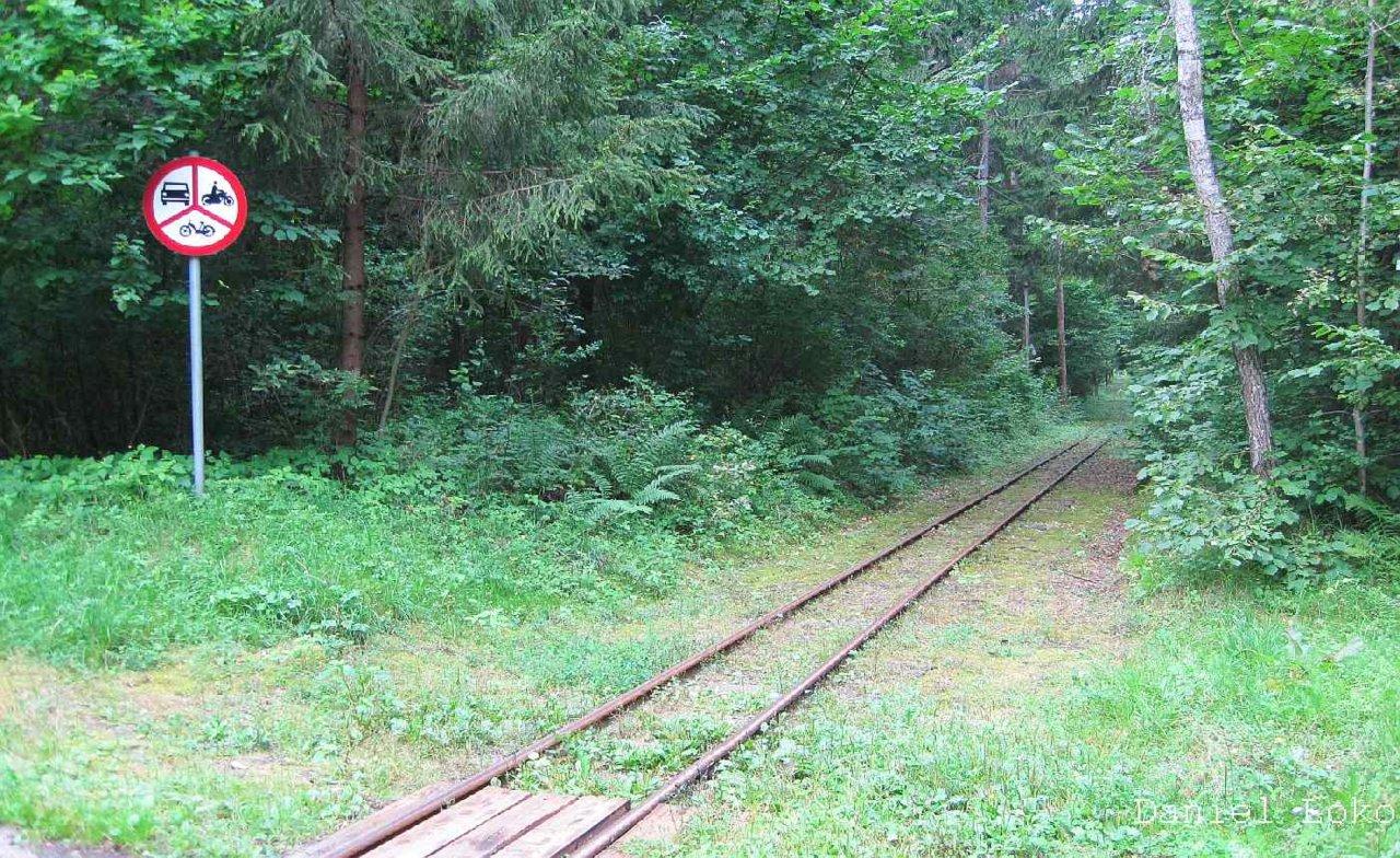 IMG_2732 szlak Kolejki Wigierskiej w puszczy.jpg
