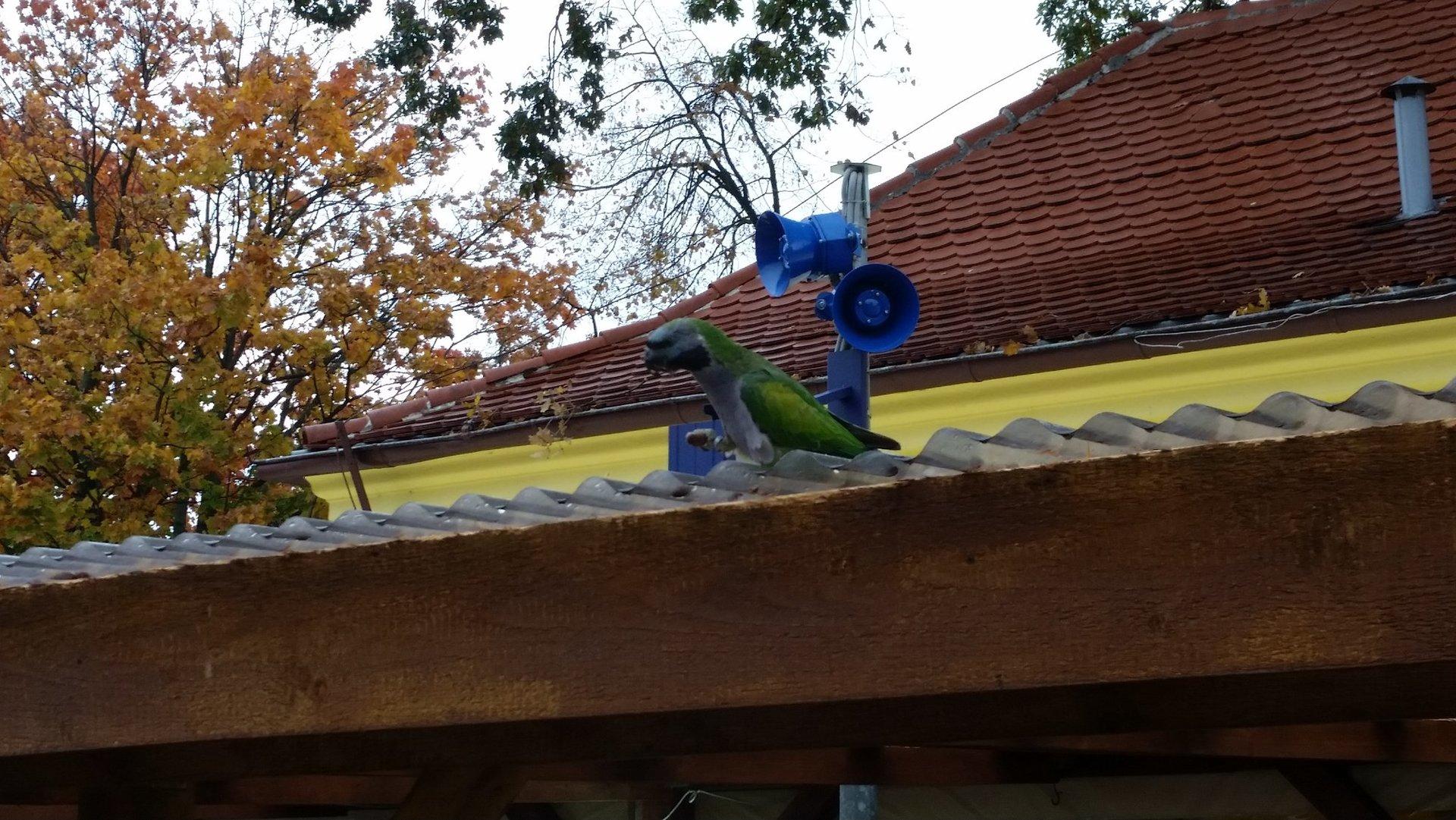 Papuga Władek.jpg