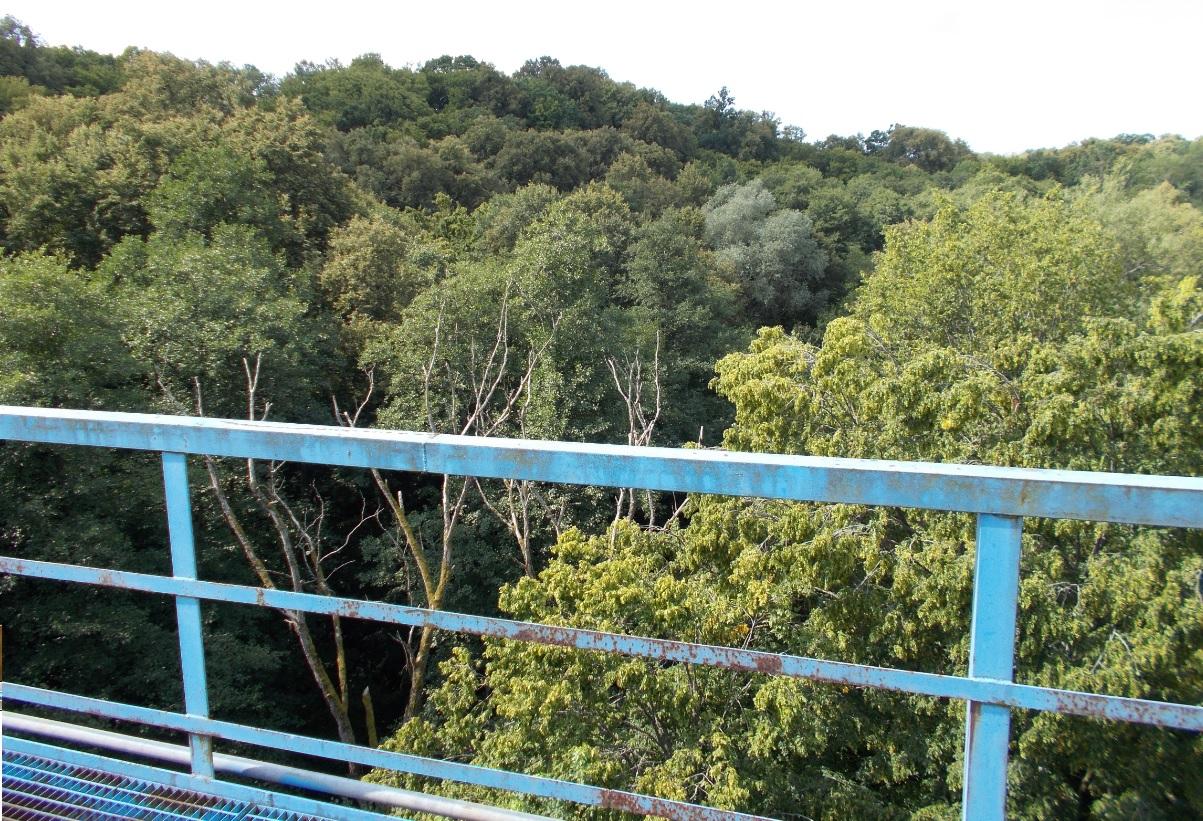 Pieniężno, most na Wałszy, widok w kierunku zachodnim (1).jpg