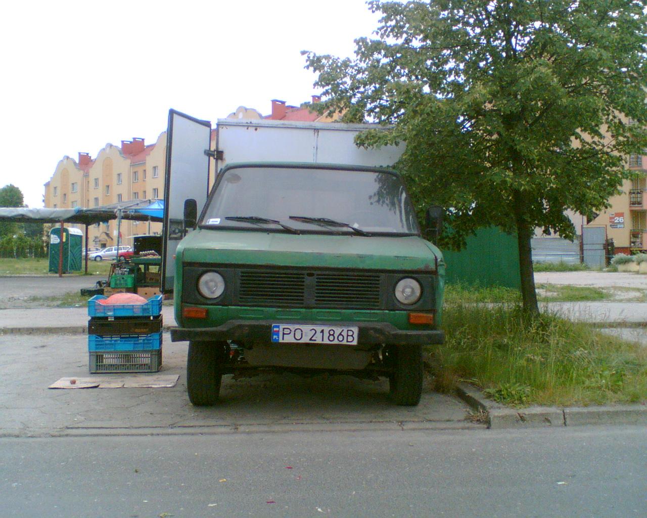 Tarpan Poznan 15.06.06.jpg