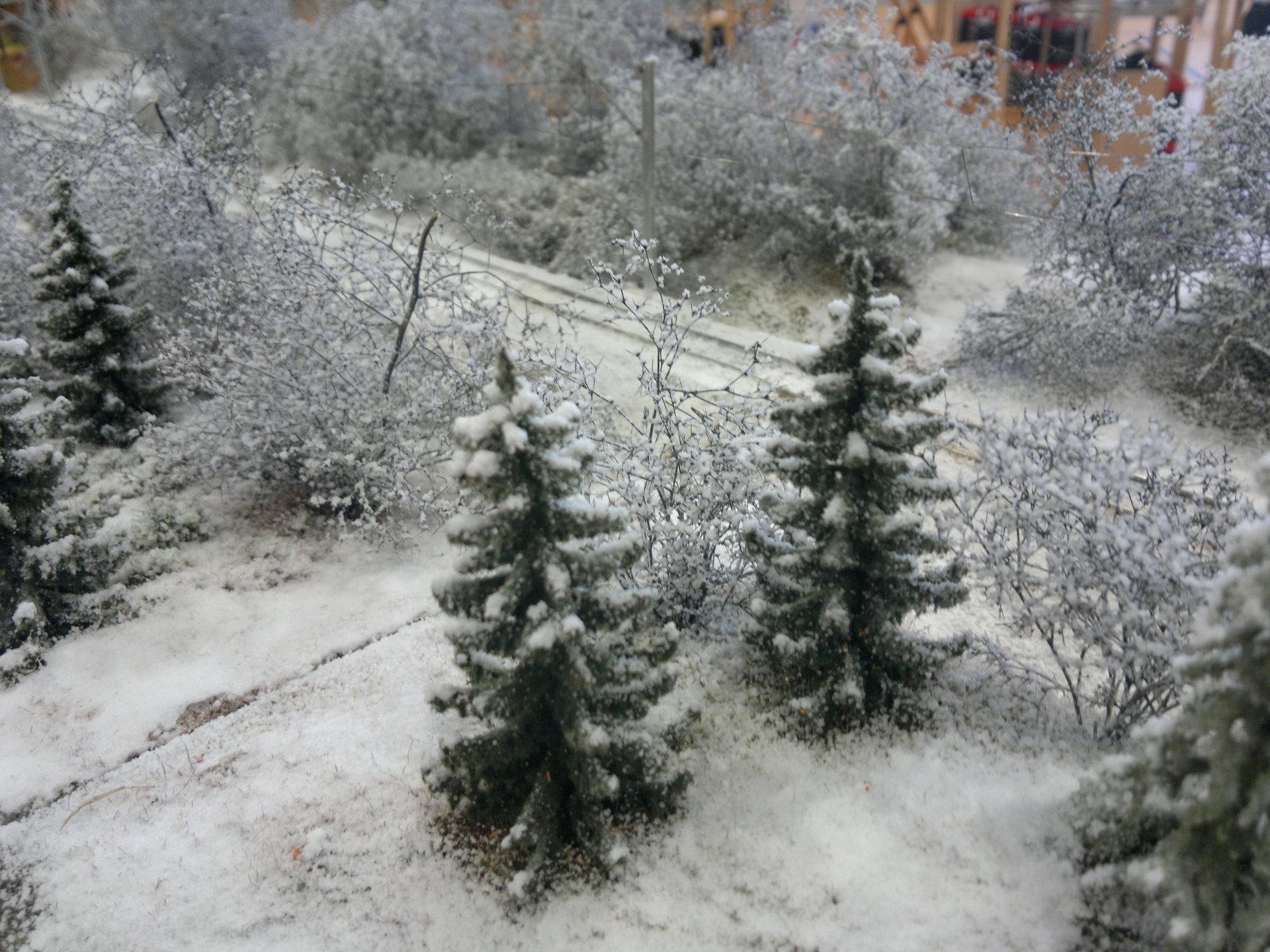 Zimowy las.jpg